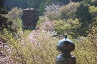 長谷寺_本堂から五重塔を望む.JPG