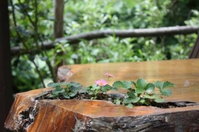 ピンクのベリーの小花