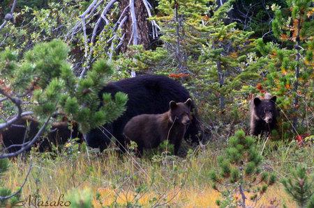 american_bear_family.jpg